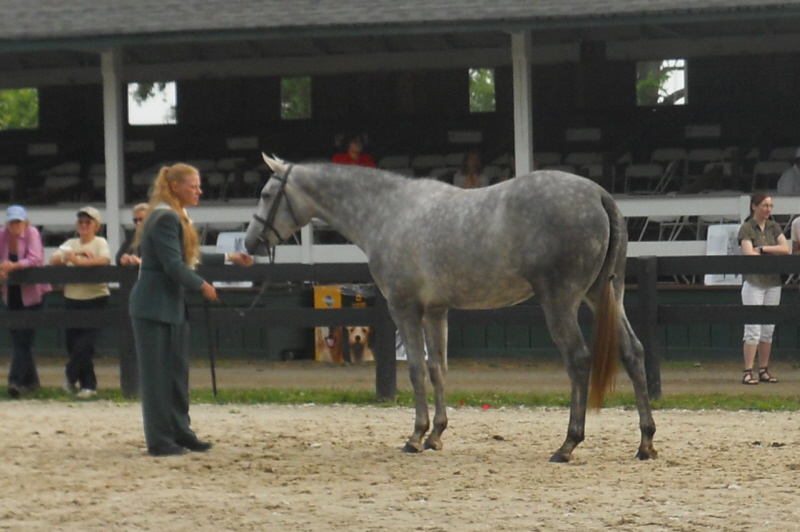 Clue_at_Upperville
